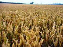 світові ринки і загроза продовольчої кризи