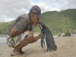 пінгвіни теж щедрі на подяку
