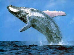 дивовижні факти про китів