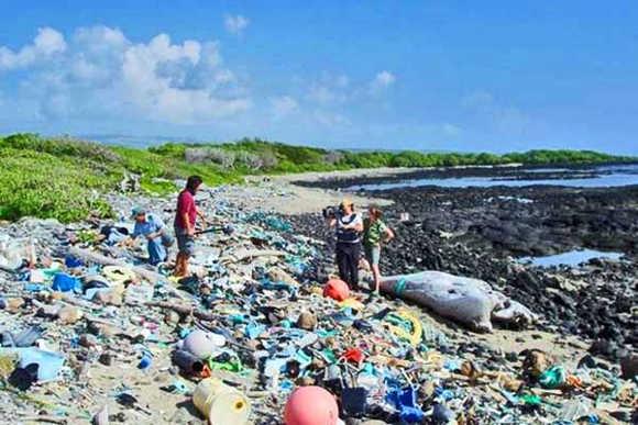 тихий океан сміттєвий