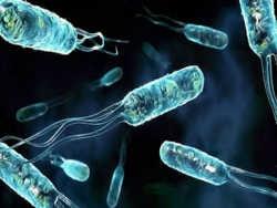 бактерії проти антибіотиків: наочний експеримент