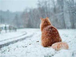 гряде найхолодніша зима за останнє століття