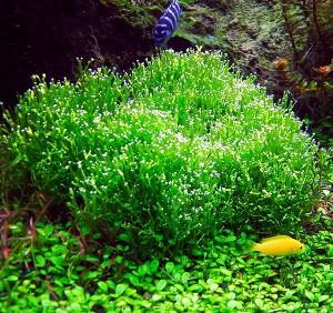Застосування в акваріумістиці