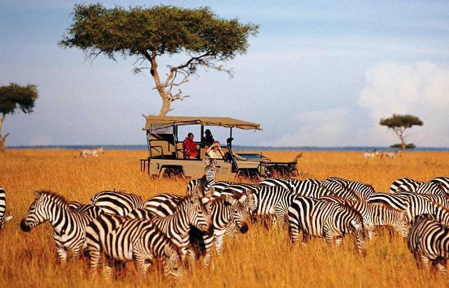 Візитна картка Африки - Сафарі
