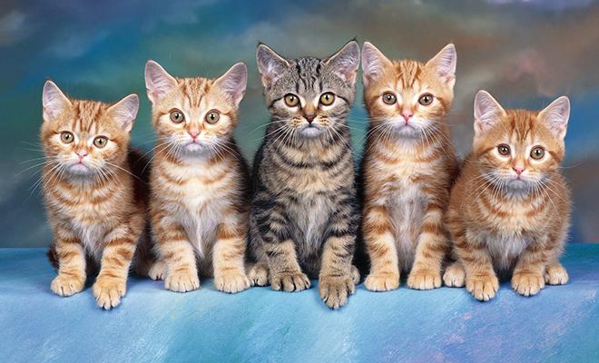 Почему и где нужно взять кота в Днепре!